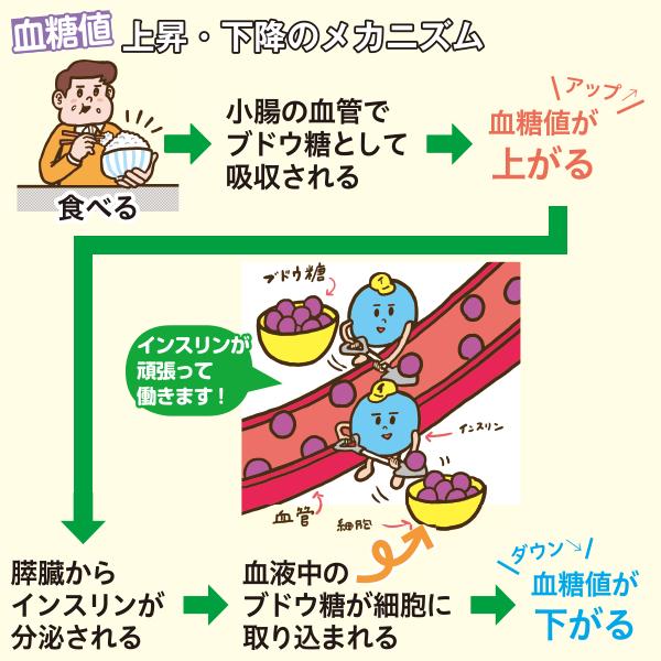 血糖値上昇・下降のメカニズム